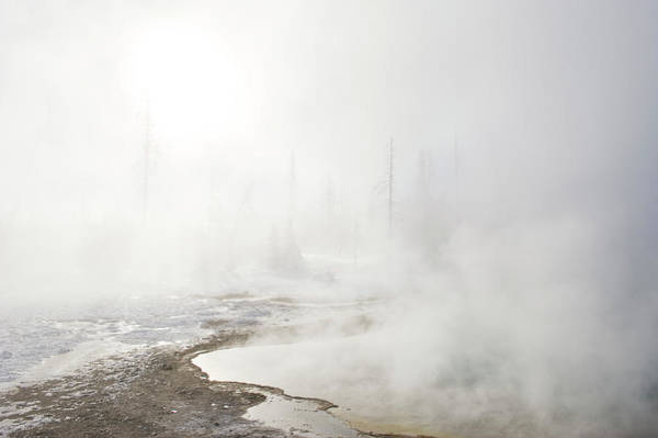Trees In Fog Photograph - Steam Rising Off Of Thermal Pools by Tom Bol