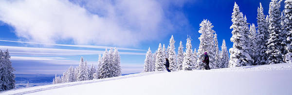 Ski Run Wall Art - Photograph - Steamboat Springs, Colorado, Usa by Panoramic Images