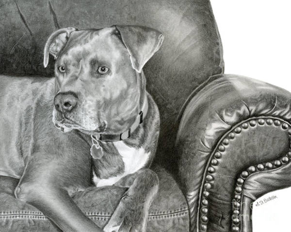 Pet Portrait Drawing - Leather And Steel by Sarah Batalka