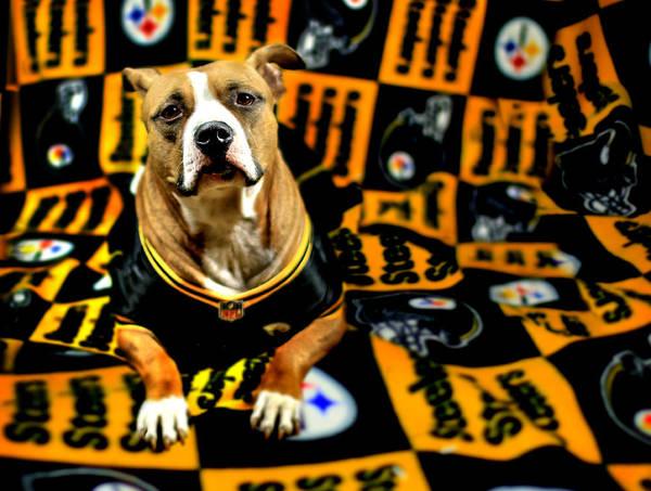 Photograph - Pitbull Rescue Dog Football Fanatic by Shelley Neff