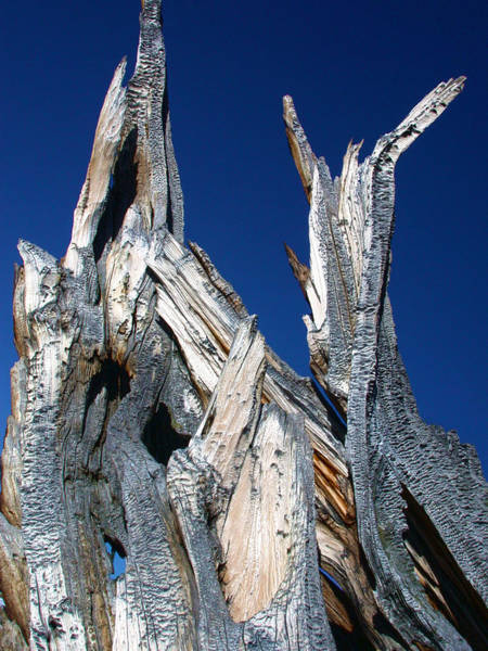 Photograph - Steeple Roots by Shane Bechler