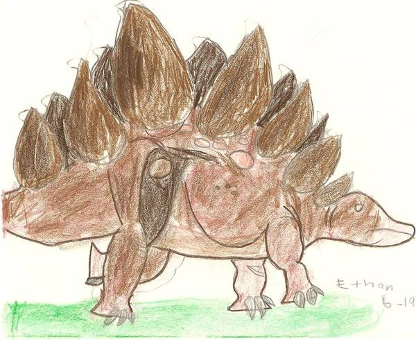 Drawing - Stegosaurus by Fred Hanna