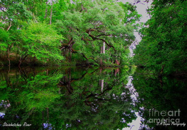 Photograph - Steinhatchee River by Barbara Bowen