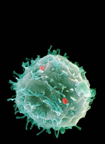 Wall Art - Photograph - Stem Cell by