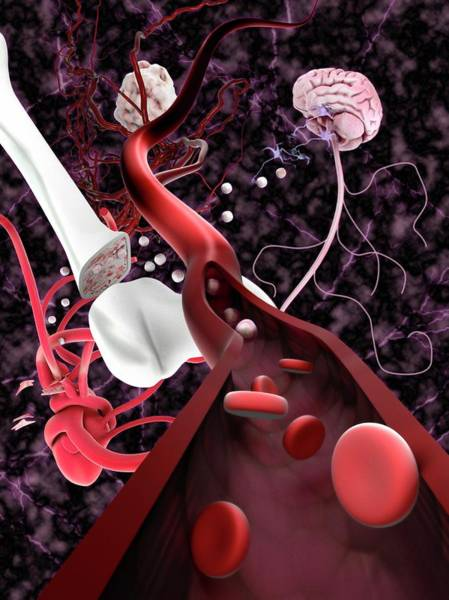 Brain Cell Wall Art - Photograph - Stem Cells And Tissue Types by Gunilla Elam