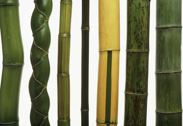 Bamboo Photograph - Stems Of Seven Types Of Bamboo by Pascal Goetgheluck/science Photo Library