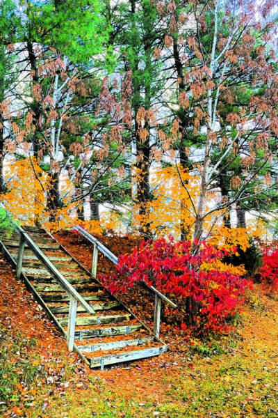 Photograph - Step Into Autumn by Lorna R Mills DBA  Lorna Rogers Photography
