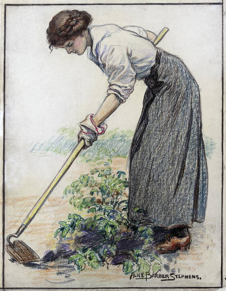 Wall Art - Drawing - Stephens Gardening, C1917 by Granger