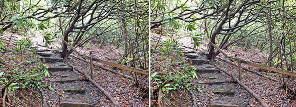 Photograph - Steps In The Woods In 3d Stereo by Duane McCullough