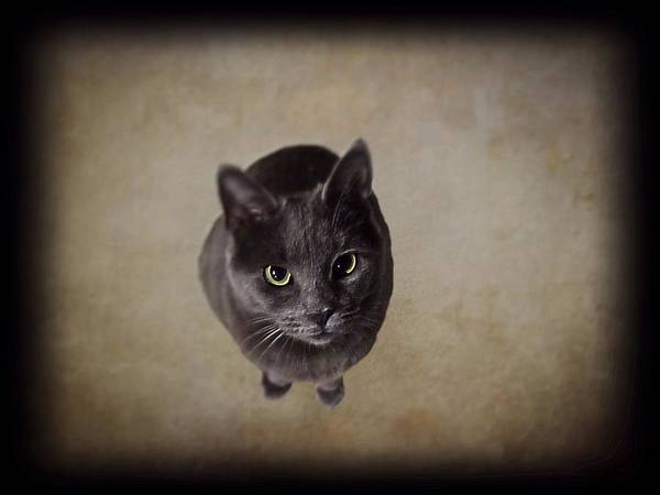 Photograph - Sterling The Cat by David Dehner
