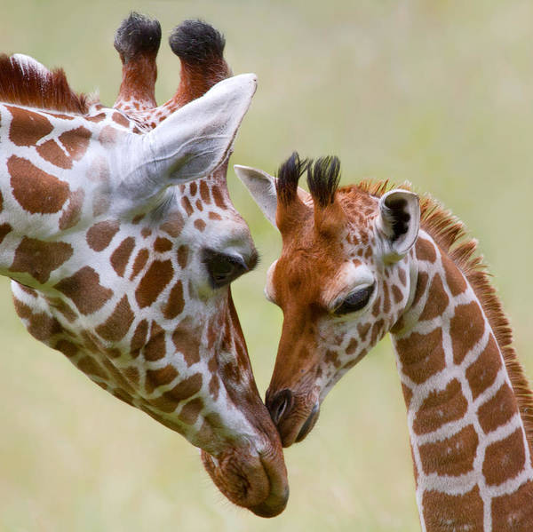 Parent Photograph - Stick With Me Kid by John Absher