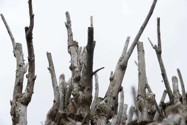 Photograph - Sticks by Teresa Blanton