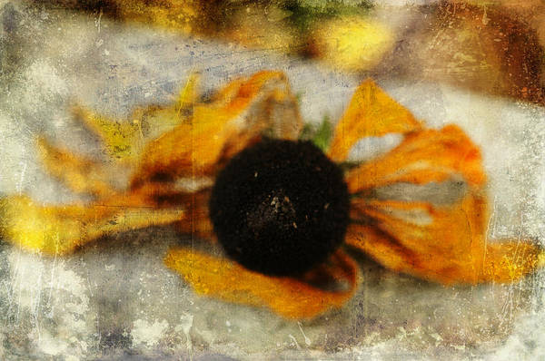 Photograph - Still Beautiful by Terry Rowe