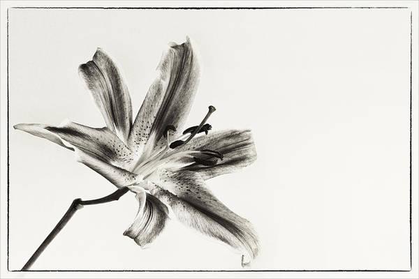 Photograph - Still Beauty by Kim Andelkovic