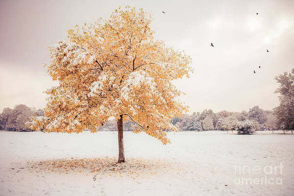 Photograph - Still Dressed In Fall by Hannes Cmarits