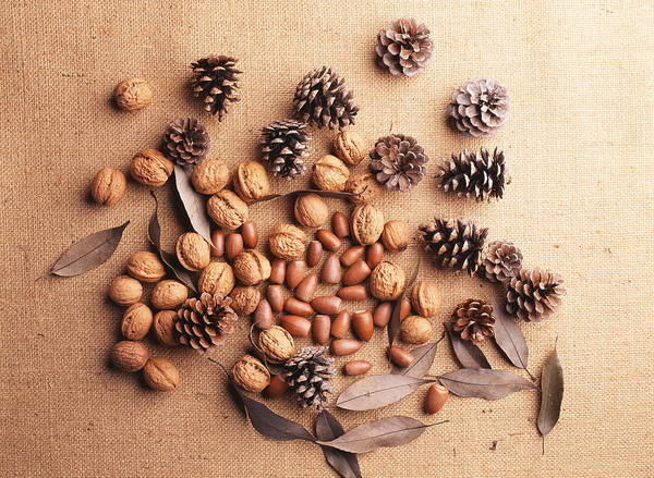 Still Life Of Pine Cones, Walnuts And Acorns Art Print by GYRO PHOTOGRAPHY/amanaimagesRF