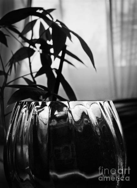 Photograph - Still Life Plant And Glass by Ellen Cotton