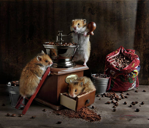 Hamster Photograph - Still Life With A Coffee Grinder, A Bag by I Love It When You Smile