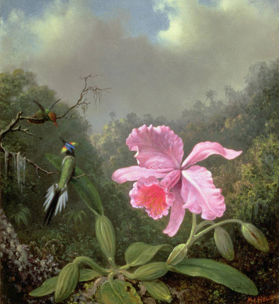 Wall Art - Painting - Still Life With An Orchid And A Pair Of Hummingbirds by Martin Johnson Heade