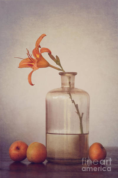 Orange Photograph - Still Life With Apricots by Diana Kraleva