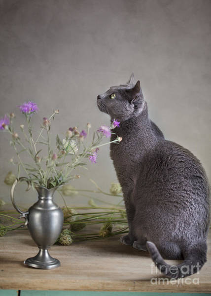 Russia Wall Art - Photograph - Still Life With Cat by Nailia Schwarz