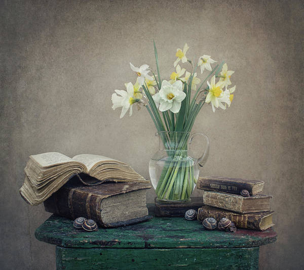 Vases Photograph - Still Life With Daffodils, Old Books And Snails by Dimitar Lazarov -