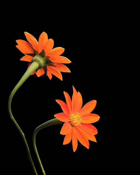 Wall Art - Photograph - Still Life With Flowers by Krasimir Tolev