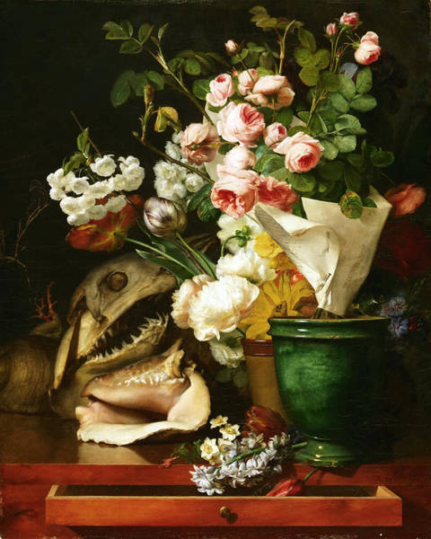 Drawers Painting - Still Life With Flowers Shells A Shark's Head And Petrifications by Antoine Berjon