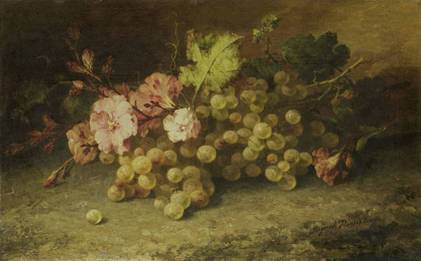 Grape Drawing - Still Life With Grapes, Margaretha Roosenboom by Litz Collection