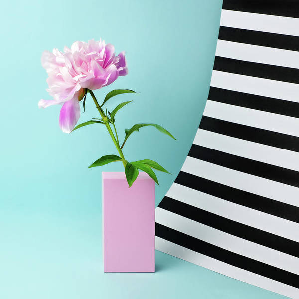Photograph - Still Life With Pink Peony And Striped by Juj Winn