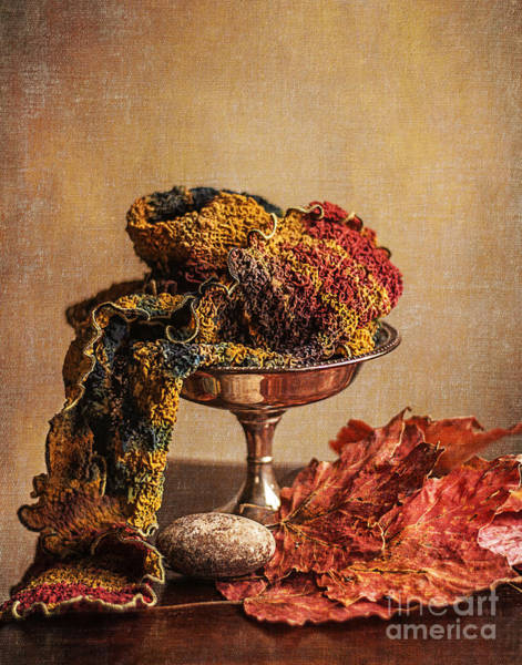 Artful Photograph - Still Life With Scarf by Terry Rowe