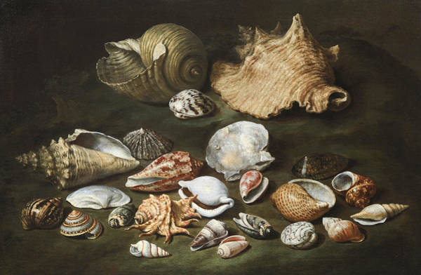 Wall Art - Painting - Still Life With Shells by Paolo Porpora