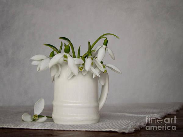 Wall Art - Photograph - Still Life With Snowdrops by Diana Kraleva