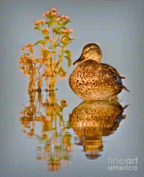 Photograph - Still Waters by Susan Candelario