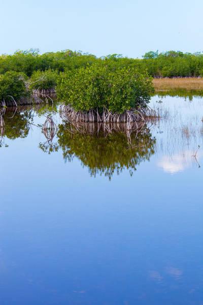 Florida Flora Photograph - Stilted Mangle by W Chris Fooshee