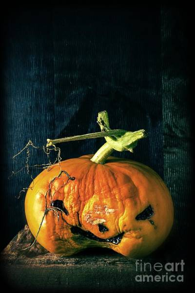 Rotten Wall Art - Photograph - Stingy Jack - Scary Halloween Pumpkin by Edward Fielding