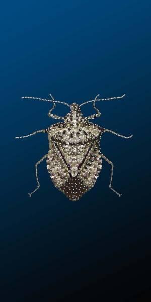 Digital Art - Stink Bug I Phone Case by R  Allen Swezey