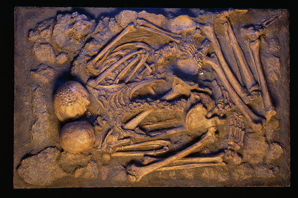 Homo Sapiens Photograph - Stone Age Human Skeletons by Pascal Goetgheluck/science Photo Library