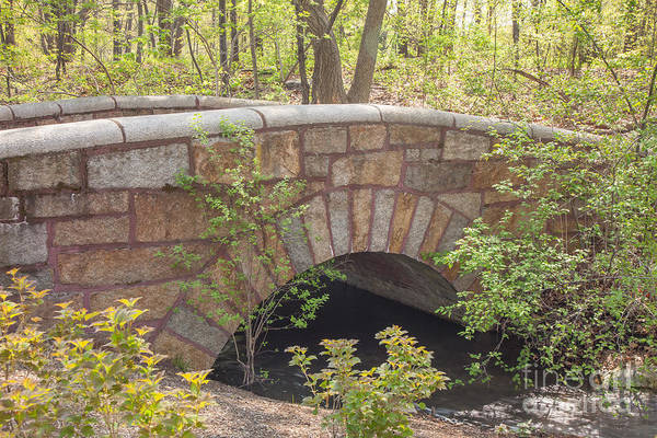 Photograph - Stone Bridge In Olmsted Park by Susan Cole Kelly