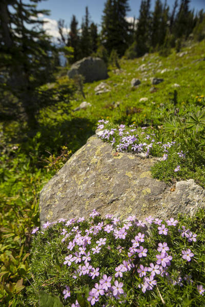 Alpine Meadows Photograph - Stone Garnish And Trail Glitter by Aaron Bedell