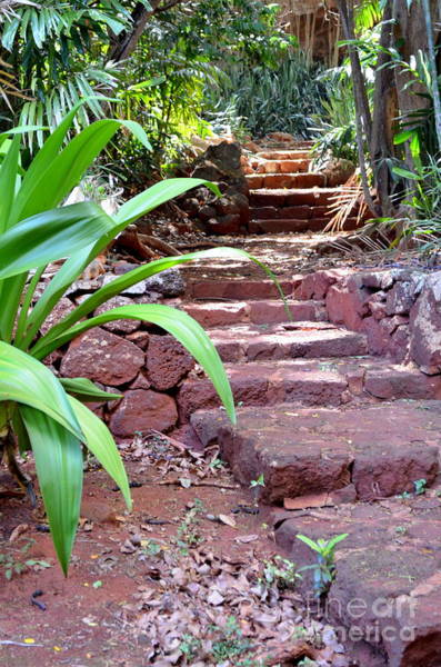 Allerton Garden Photograph - Stone Steps by Mary Deal