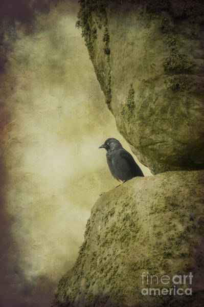 Photograph - Stonehenge Birds 2 by Clare Bambers