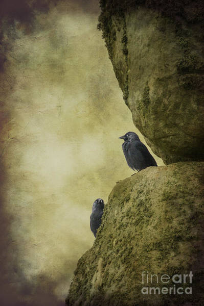 Photograph - Stonehenge Birds by Clare Bambers