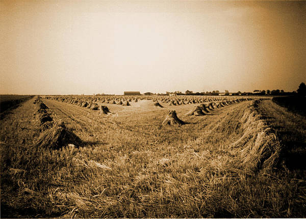 Photograph - Stooks by Richard Reeve