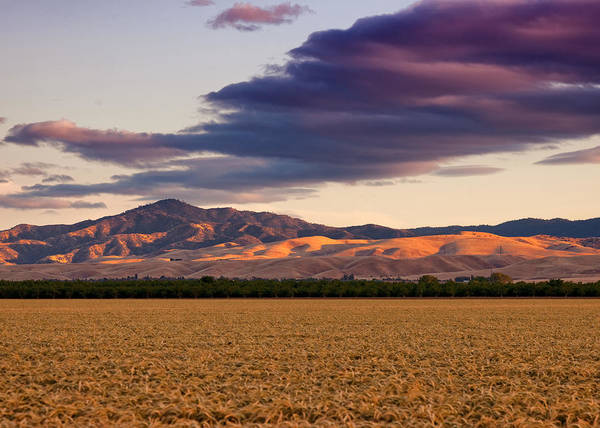 San Joaquin Valley Photograph - Storm Clouds And Wheat Fields San Joaquin County Ca by Troy Montemayor