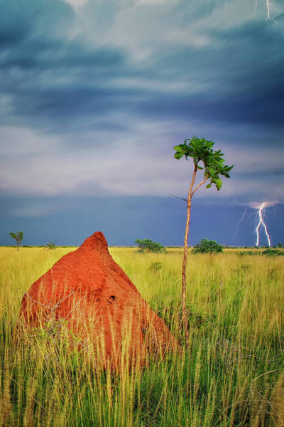 Monsoon Photograph - Storm Over Termite Mound by Simon Phelps Photography