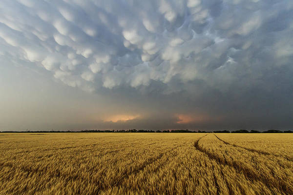 Photograph - Storm Over Wheat by Rob Graham