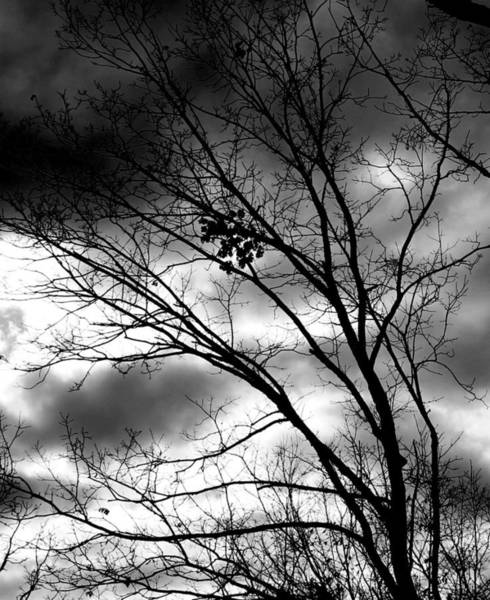 Photograph - Stormy Beauty by Candice Trimble