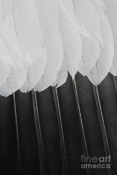 Wall Art - Photograph - Stormy Feathers by Judy Whitton