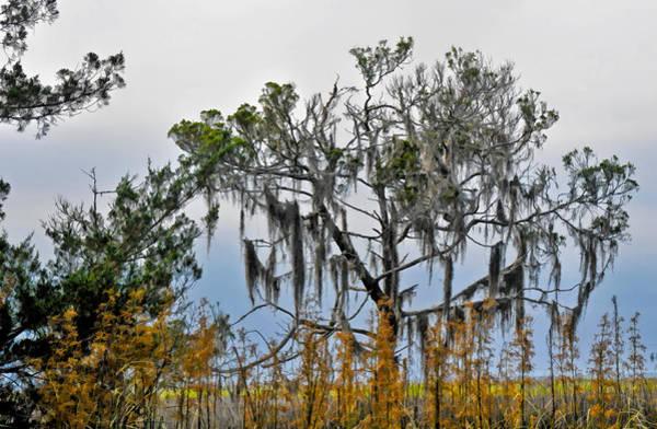 Photograph - Stormy Marsh Cedar Tree by Ginger Wakem